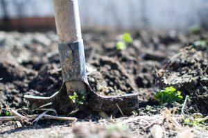 Une pelle qui creuse dans la terre d'un potager